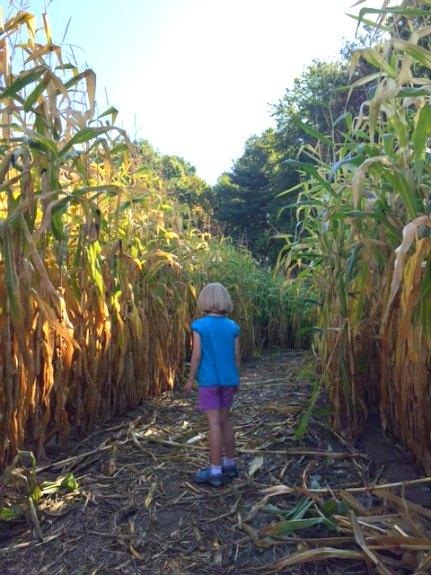 Sam Mazza's Corn Maze - Colchester, VT