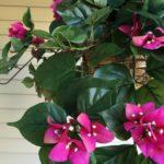 Realistic Silk Plants
