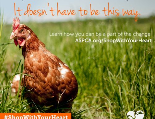 Take the Pledge to #ShopWithYourHeart for Farm Animals