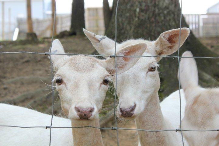 Adirondack Animal Land - Gloversville, NY