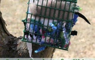 Spring Bird Nesting