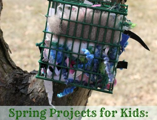 Spring Projects for Kids: Bird Nesting Materials