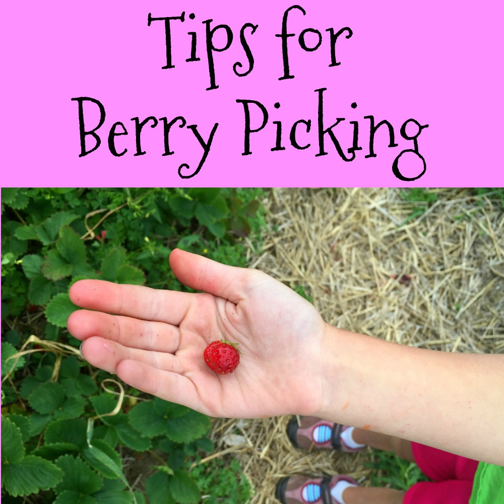 Tips for Berry Picking