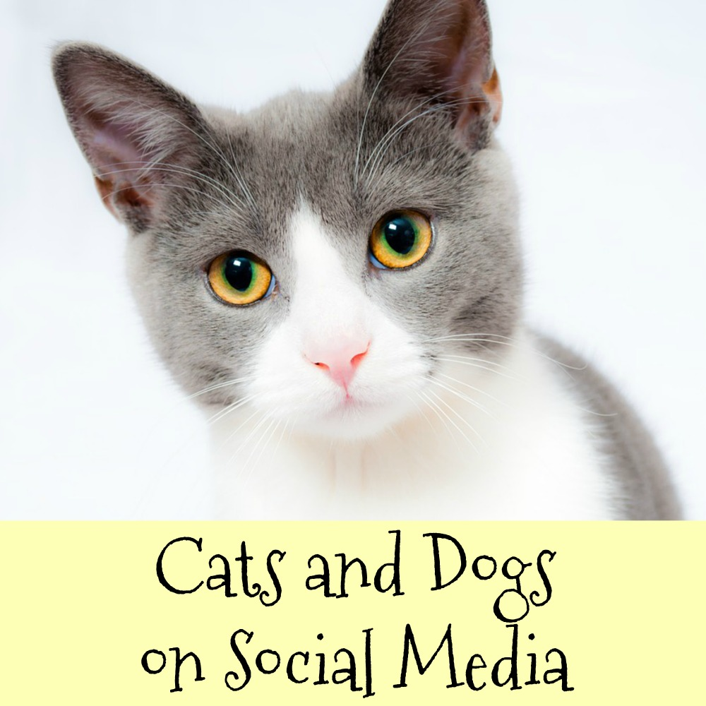 Cats and Dogs Enjoy Higher Fan Following than Humans on Social Media – How?