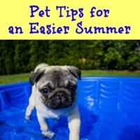 Pet Tips for an Easier Summer