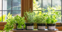 Grow Herbs and Vegetables Indoors