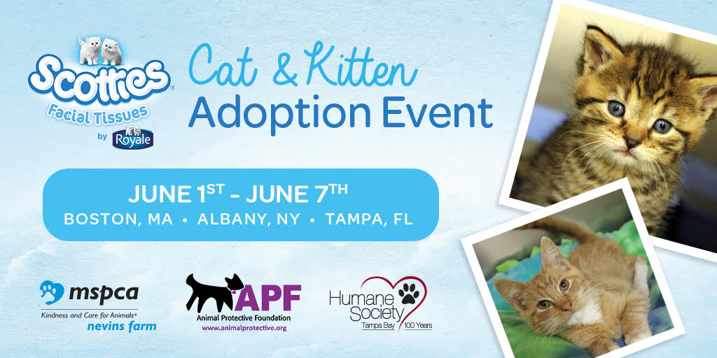 Scotties Cat and Kitten Adoption Event