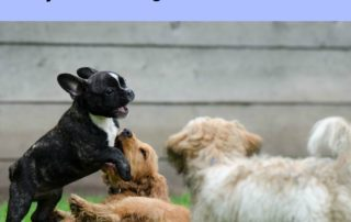 Top 10 dog breed facts