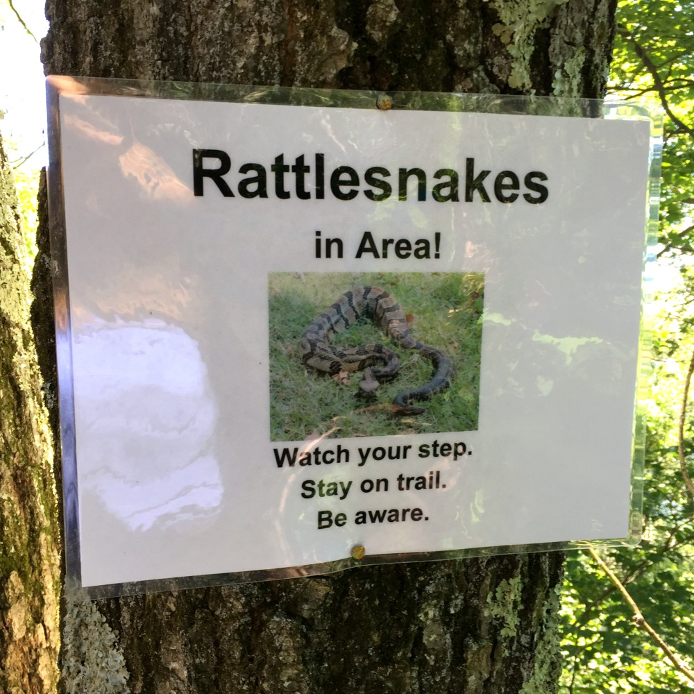 Overlook Mountain Timber Rattlesnake