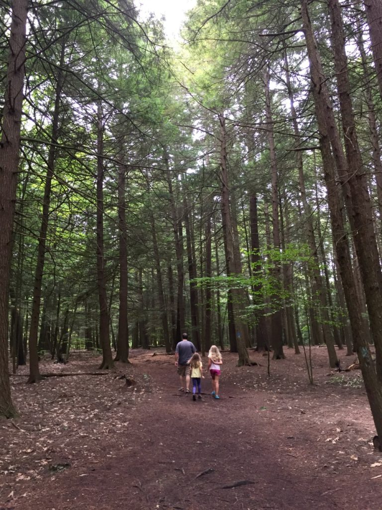 Quechee Gorge State Park trail