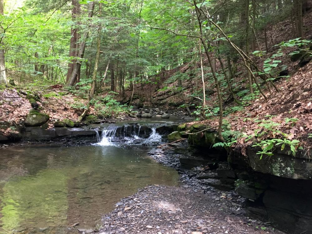 Sanders Preserve Falls