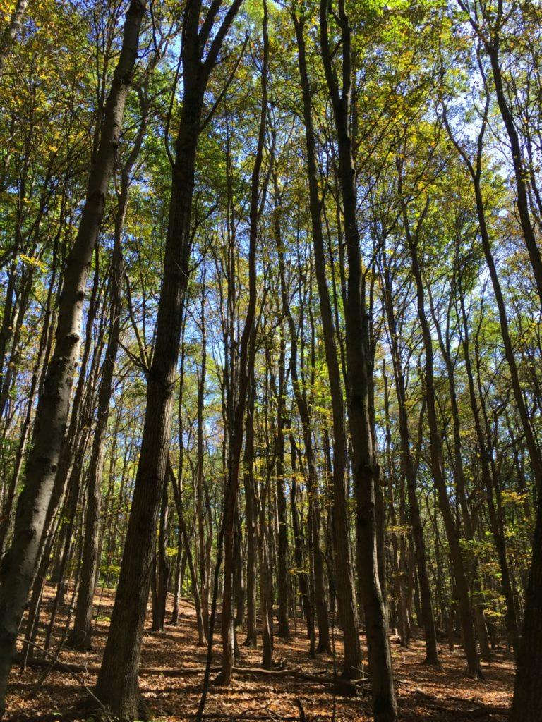 Hannacroix Ravine Preserve