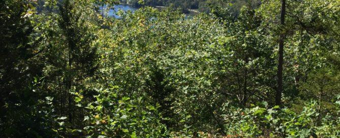 Echo Lake Vista Trail Ludlow Vermont