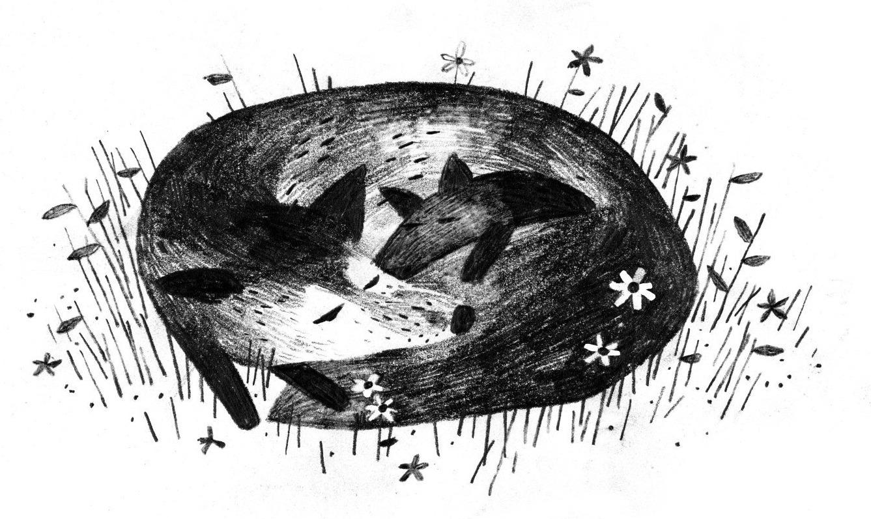 Pax Illustration