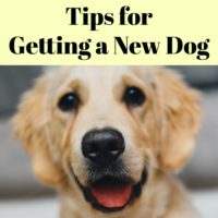Tips for Getting a New Dog