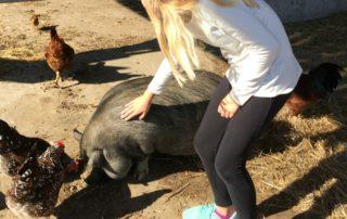 Taylor Farm Pig