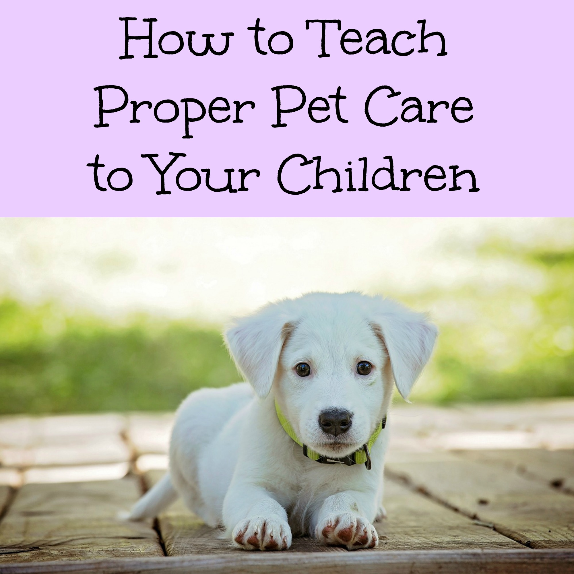How to Teach Proper Pet Care to Your Children