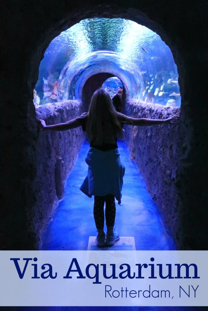 Via Aquarium Rotterdam