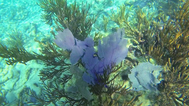 Yal Ku Lagoon Akumal Mexico