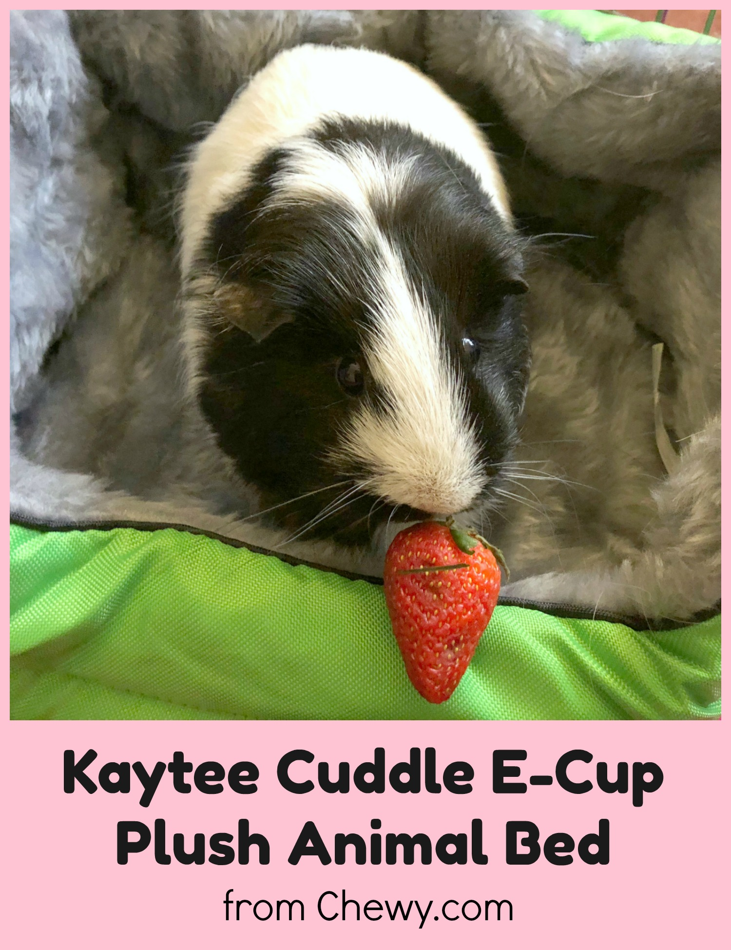 Oxbow Kaytee Cuddle E Cup Small Animal Bed