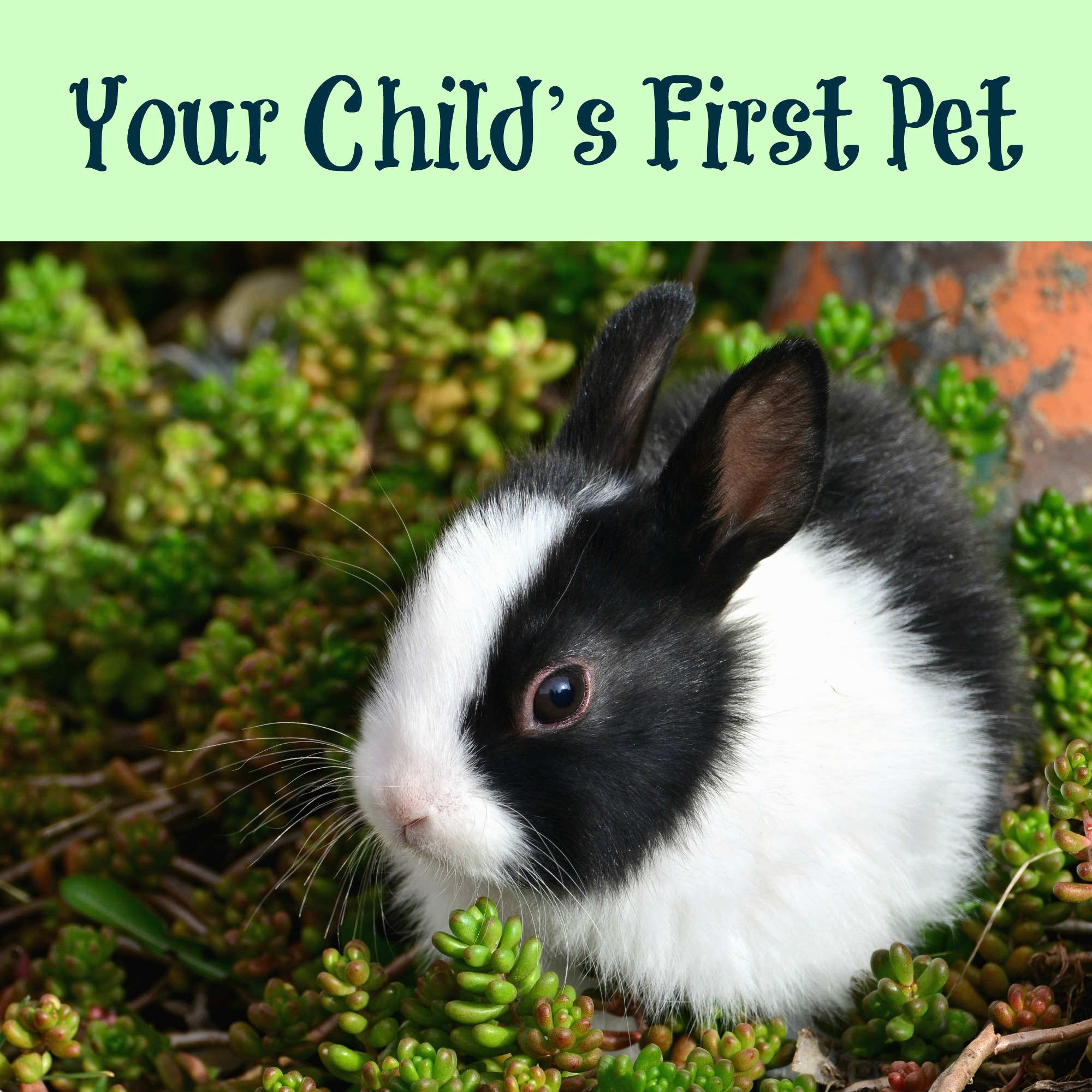Your Child's First Pet