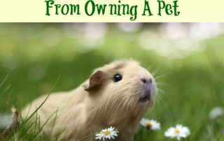 Important Life Lessons Your Child Can Learn From Owning A Pet