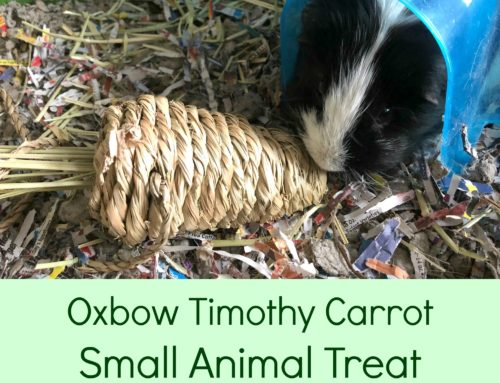 Oxbow Timothy Carrot Small Animal Treat from Chewy.com
