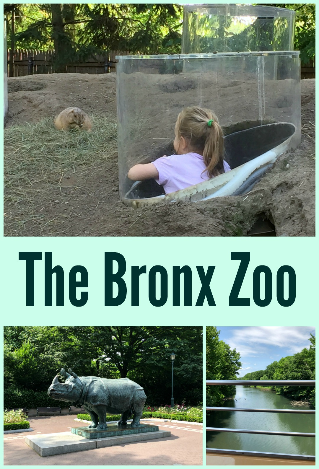 The Bronx Zoo Bronx Ny A Nation Of Moms