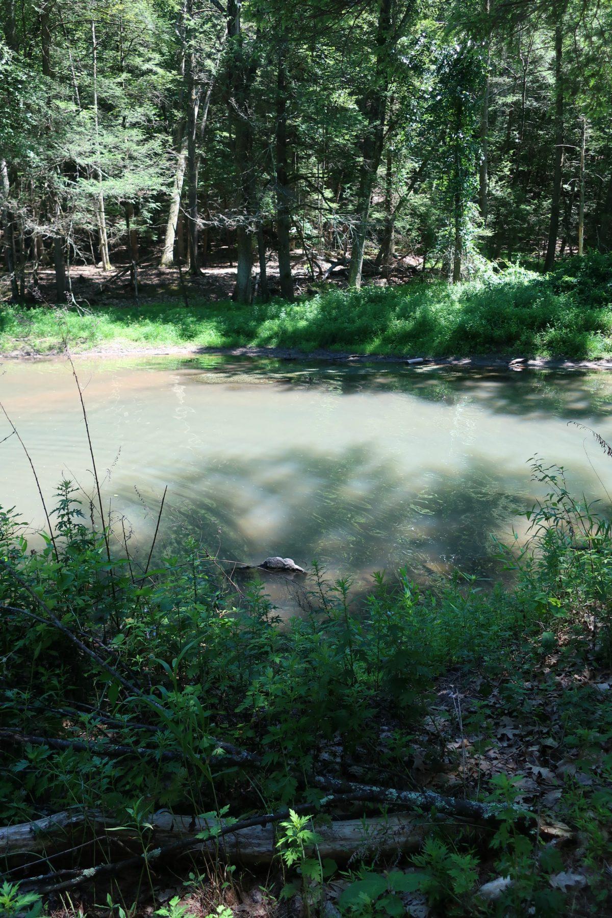 Big Deep Swimming Hole Woodstock