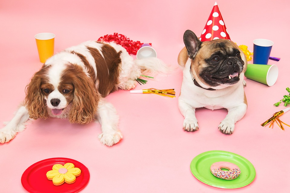 Small Dog Party