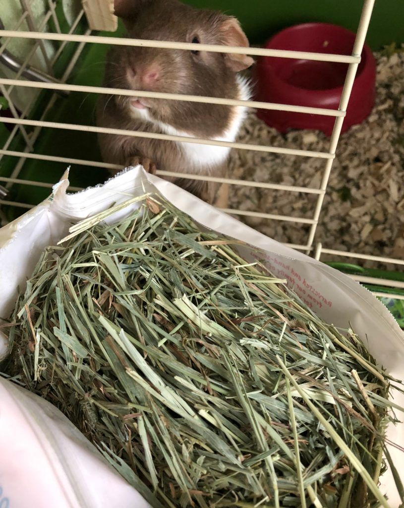 Chewy Oxbow Timothy Hay