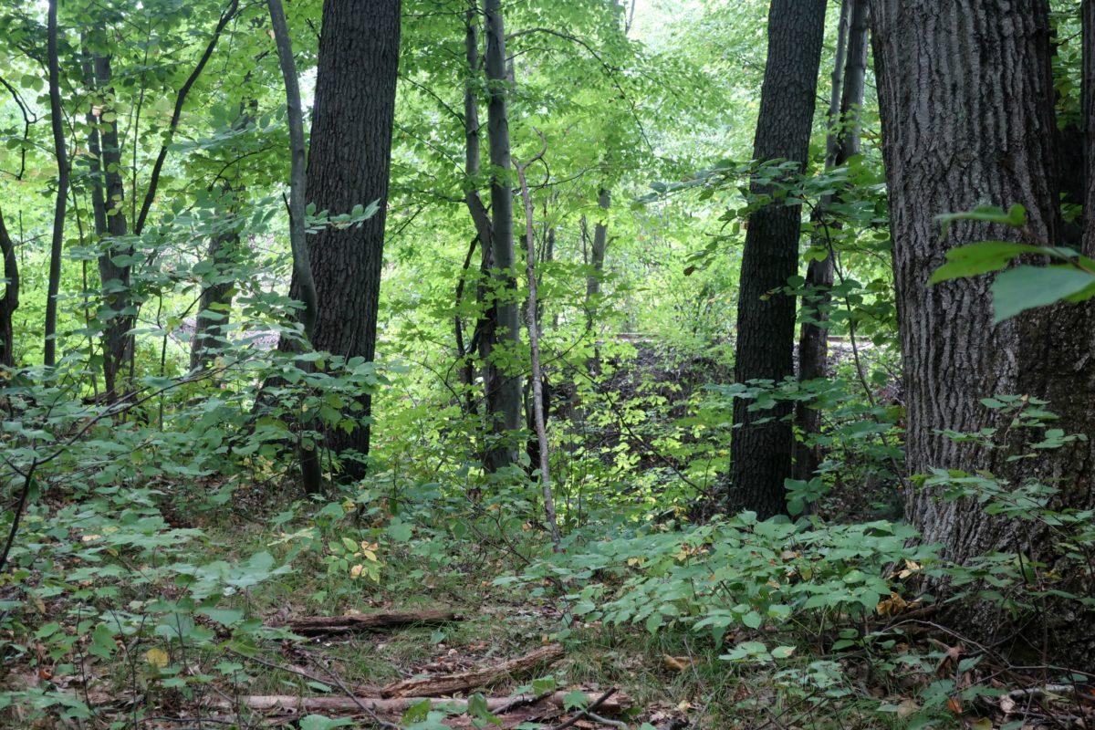 Dwaas Kill Nature Preserve Clifton Park New York