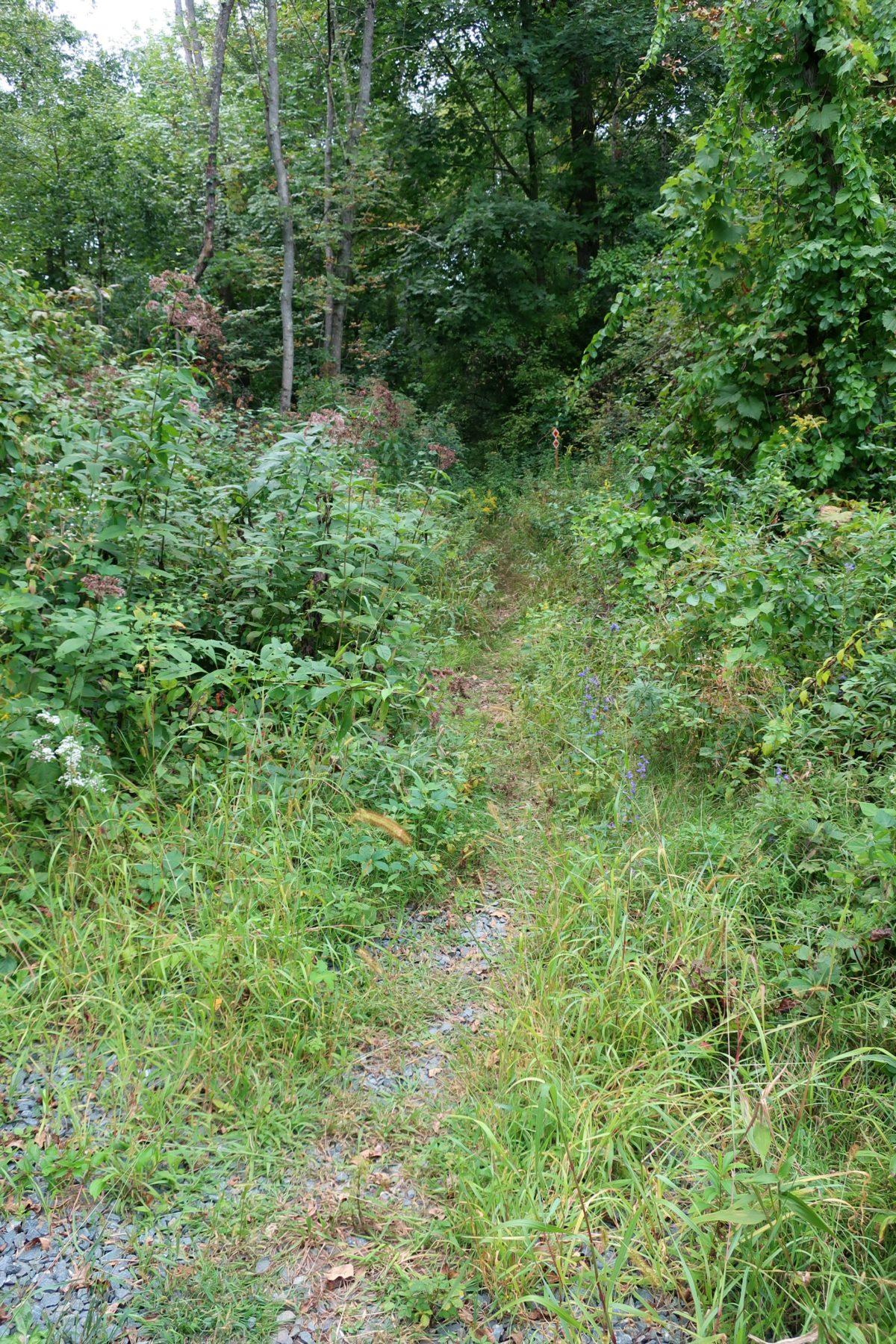 Dwaas Kill Nature Preserve Clifton Park
