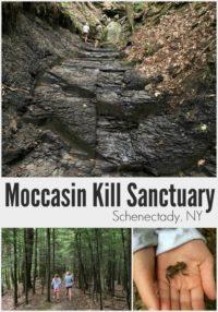 Moccasin Kill Sanctuary Schenectady