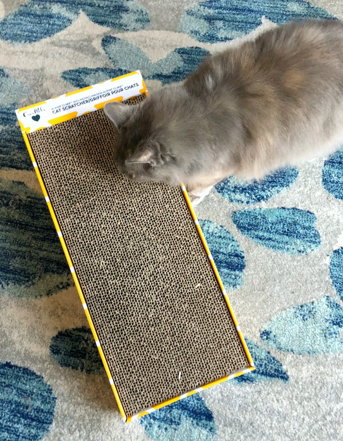 Chewy Cat Scratcher