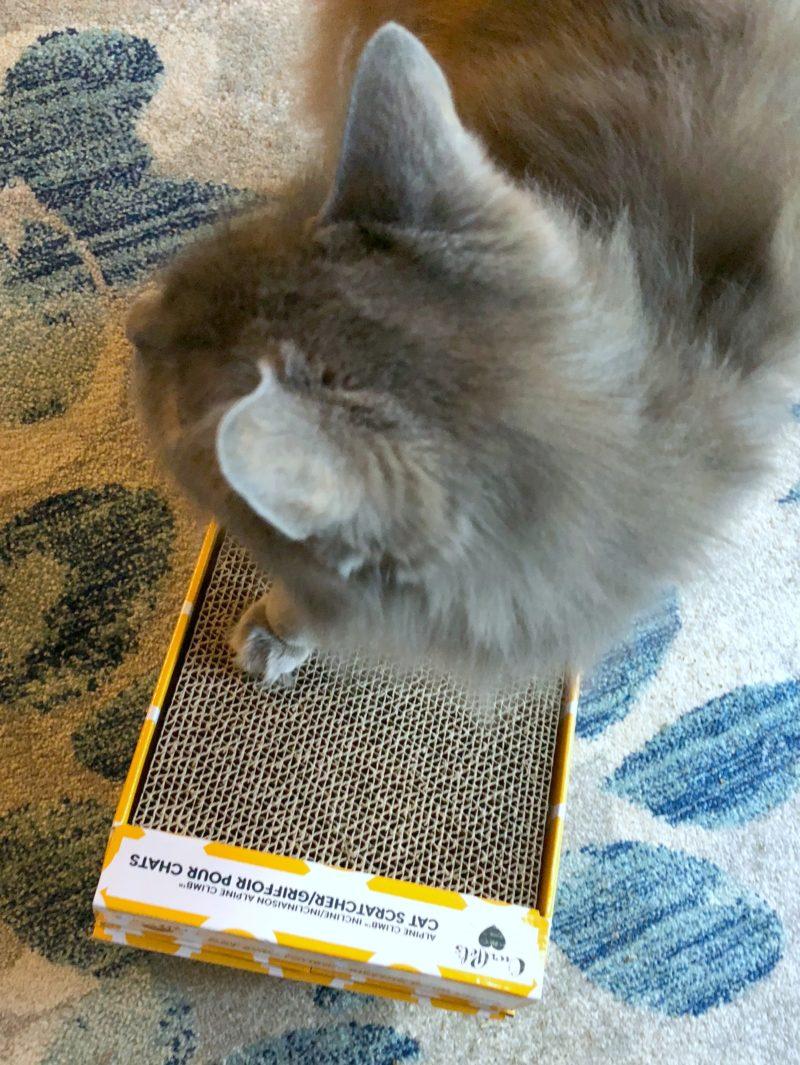 Chewy Cat Scratcher