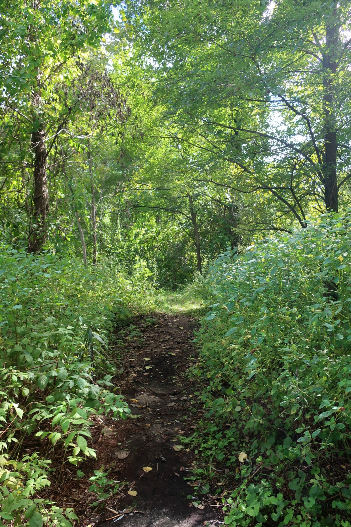 Woodlawn Preserve Schenectady NY