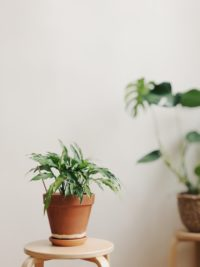 houseplant plant air quality home