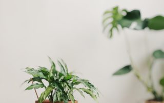 houseplant plant air quality home