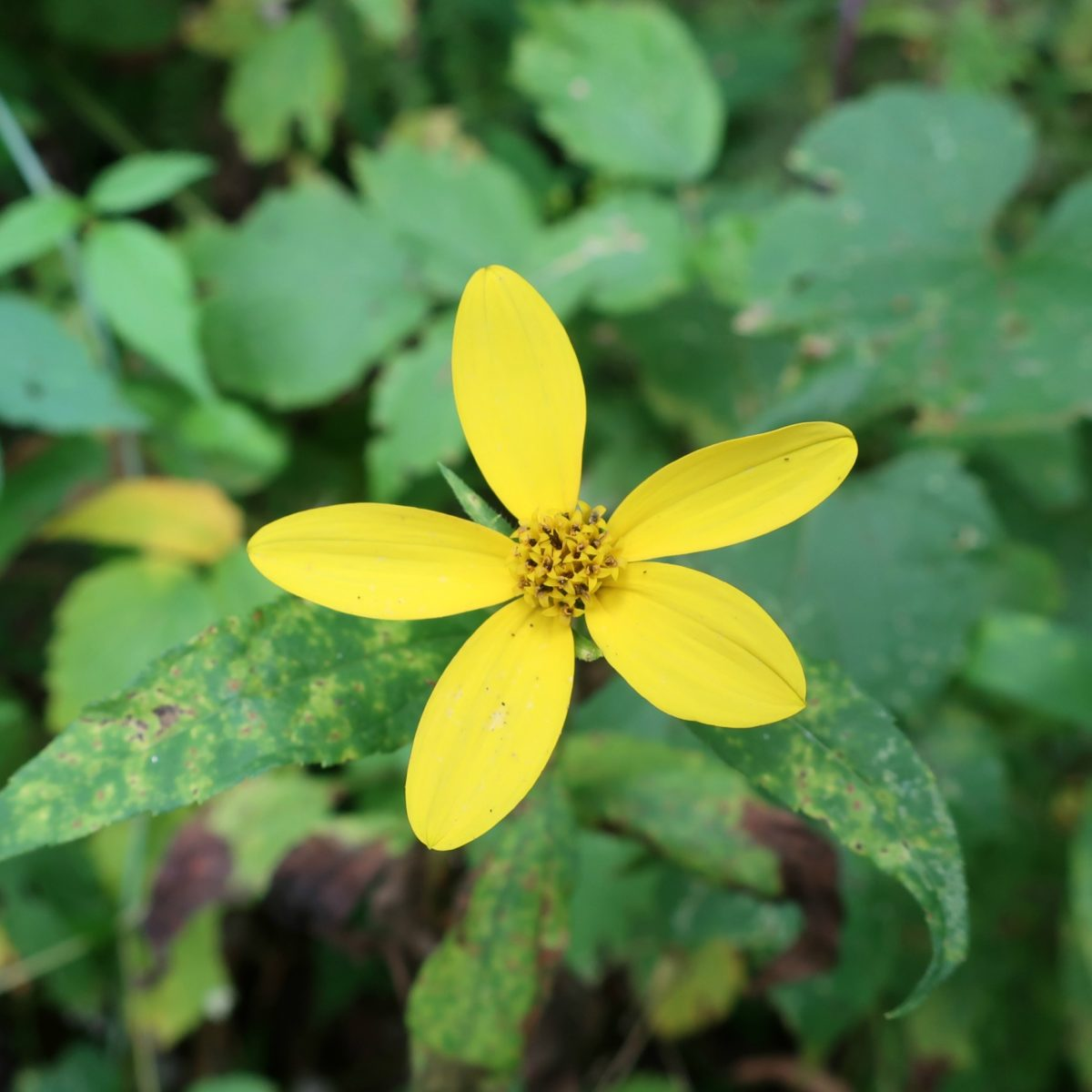 Indian Kill Nature Preserve, Schenectady New York
