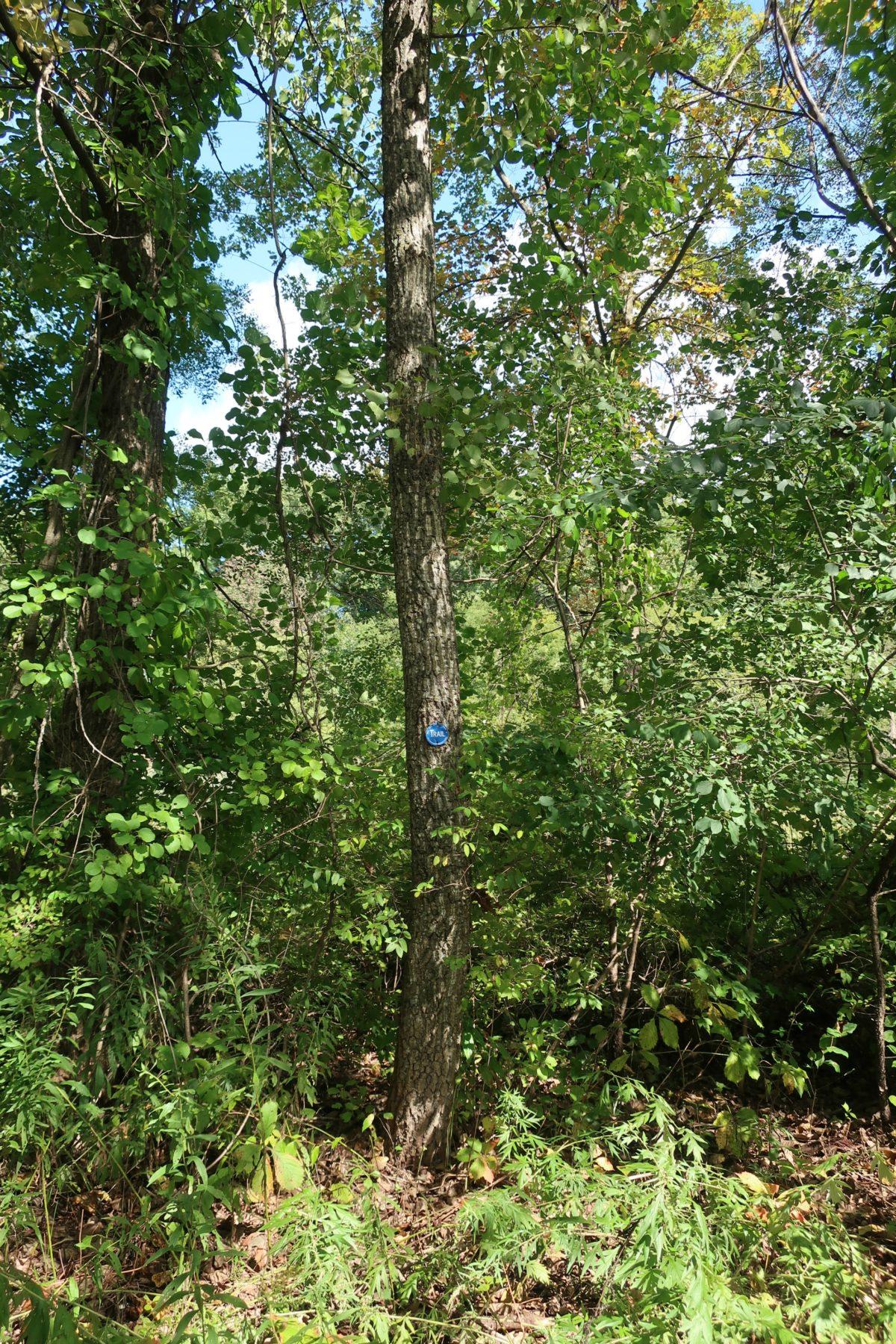 Woodlawn Preserve Schenectady New York