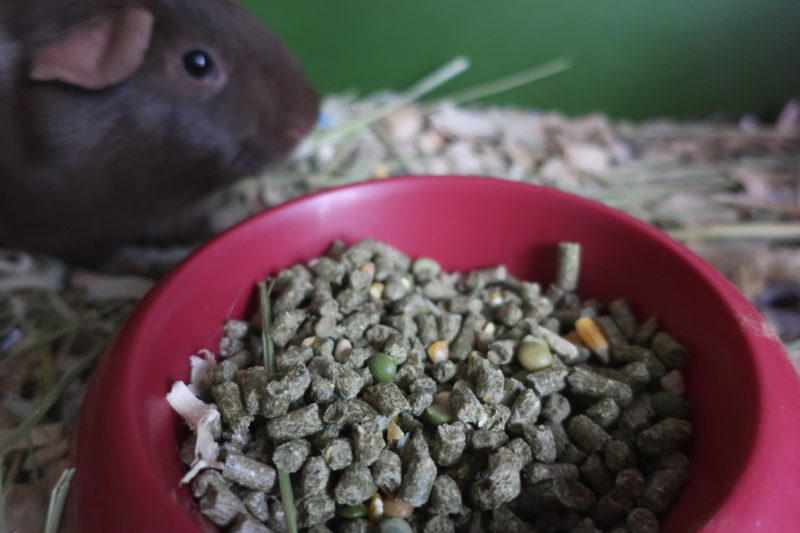 Carefresh Complete Guinea Pig Food Chewy