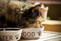 Cat Food Bowl