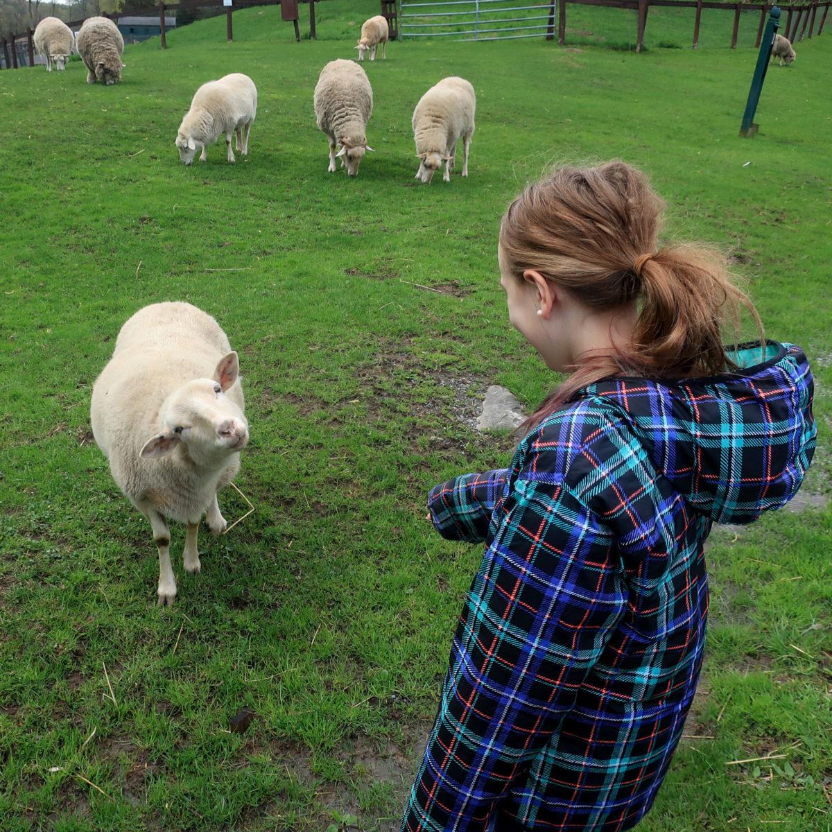 Catskill Animal Sanctuary, Saugerties, NY – A Nation of Moms