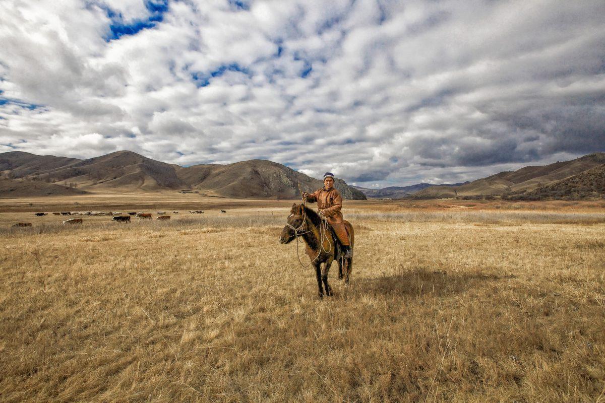 Mongolia horse