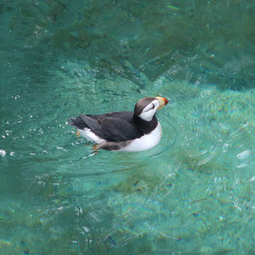Point Defiance Zoo & Aquarium Tacoma Washington