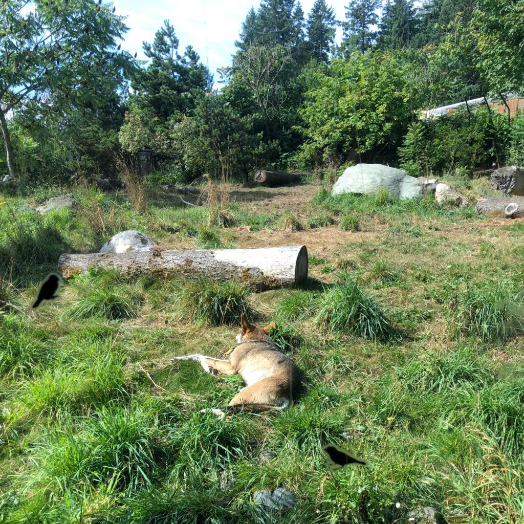 Point Defiance Zoo & Aquarium Tacoma Washington puffin