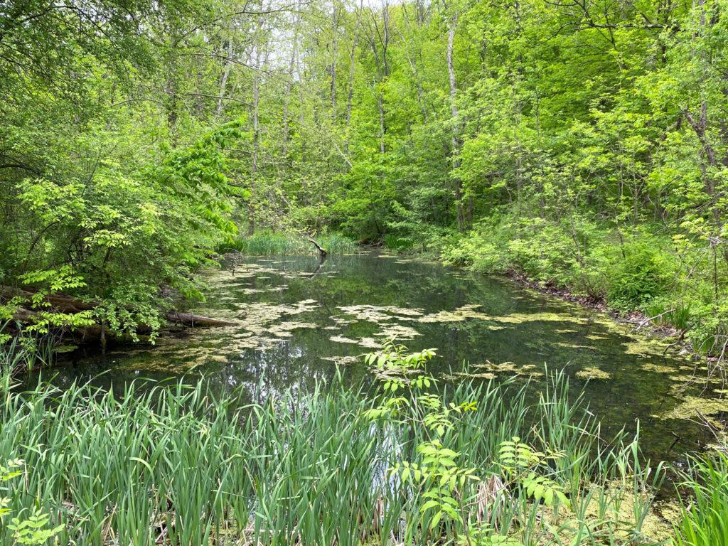 Hollyhock Hollow Preserve Selkirk New York